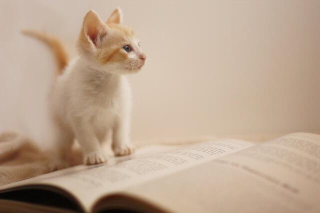 『読めばわかる! 算数1』は算数を物語形式で楽しく学べる