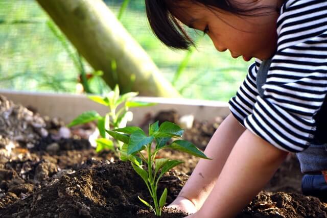『コップひとつからはじめる 自給自足の野菜づくり百科』で観察日記